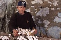 Jacky Roulleau, champignonniste