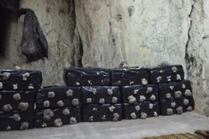 Les sacs remplis de compost sont percés de plusieurs trous. Ainsi les pleurotes pousseront essentiellement par ces trous