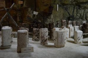 La mise en place des blocs de shiitake se fait manuellement dans la cave.