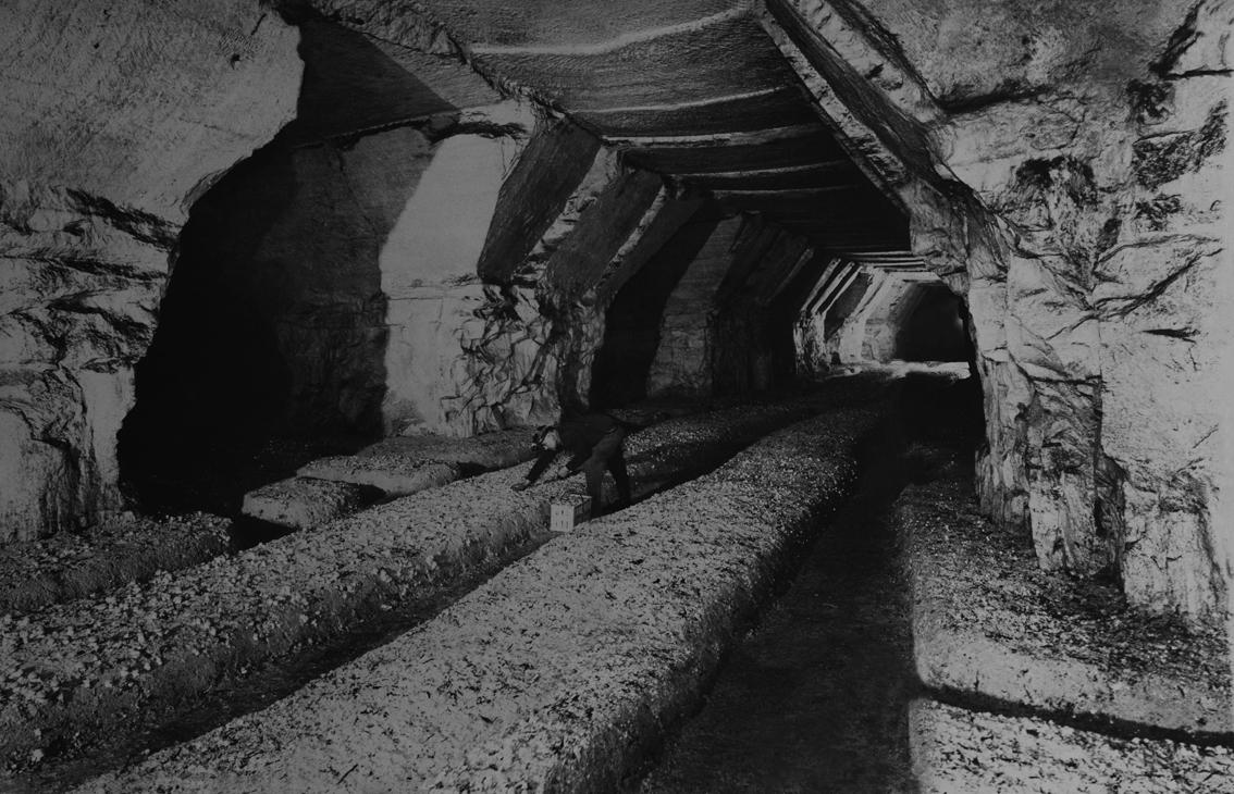 Cultures en meules dans les catacombes parisiens.