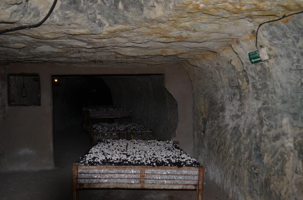 methode de culture en grands bacs cave vivante du champignon diaporama sur les m thodes de. Black Bedroom Furniture Sets. Home Design Ideas
